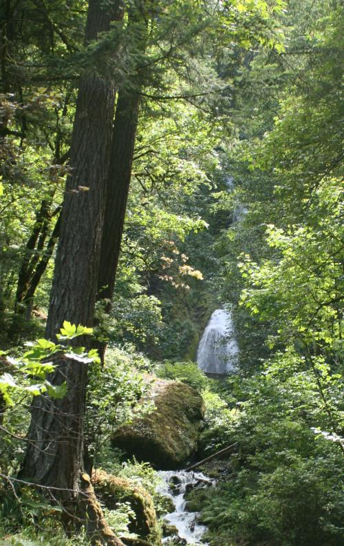 Wahkeena Falls from road