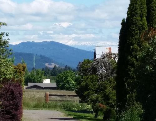 Mt Adams from WAAAM